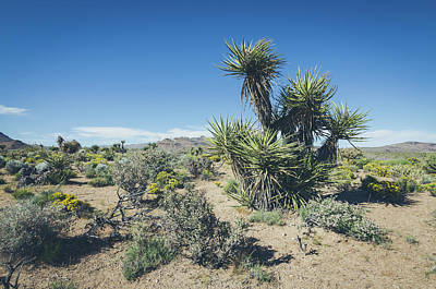 Photograph - Mojave National Preserve No.3 by Margaret Pitcher