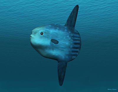 Sunfish Digital Art - Mola Mola Ocean Sunfish by Walter Colvin