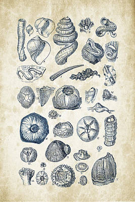 Sea Shells Digital Art - Mollusks - 1842 - 01 by Aged Pixel