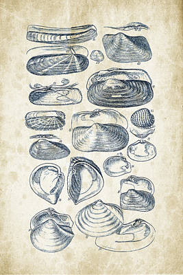 Invertebrates Digital Art - Mollusks - 1842 - 03 by Aged Pixel