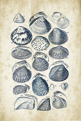Mollusks - 1842 - 06 Art Print by Aged Pixel