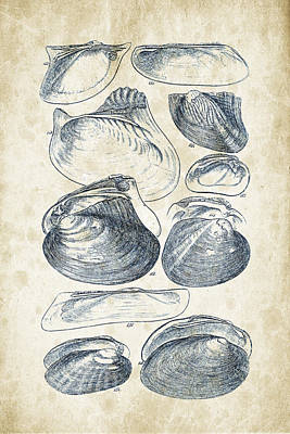 Invertebrates Digital Art - Mollusks - 1842 - 08 by Aged Pixel