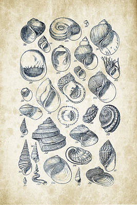 Mollusca Digital Art - Mollusks - 1842 - 15 by Aged Pixel