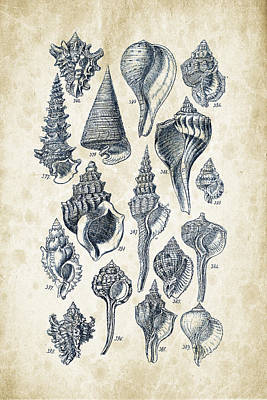Biology Digital Art - Mollusks - 1842 - 17 by Aged Pixel