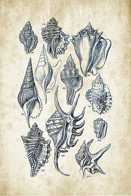 Mollusk Digital Art - Mollusks - 1842 - 18 by Aged Pixel