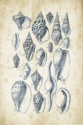 Books Digital Art - Mollusks - 1842 - 20 by Aged Pixel