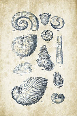 Mollusca Digital Art - Mollusks - 1842 - 23 by Aged Pixel