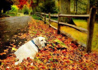 Love My Dog Photograph - Molly Loves Autumn by Diana Angstadt