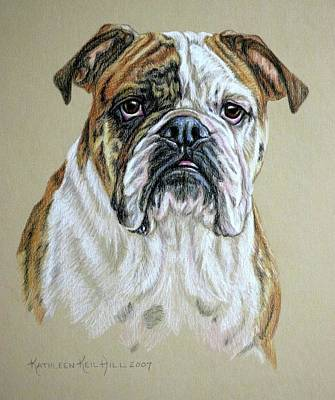 Drawing - Molly by Kathleen Hill