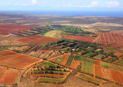 Molokai Cropland Print by Kevin Smith