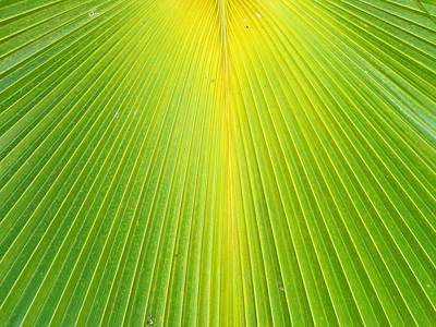 Photograph - Molokai Palm Fan by Robert Meyers-Lussier