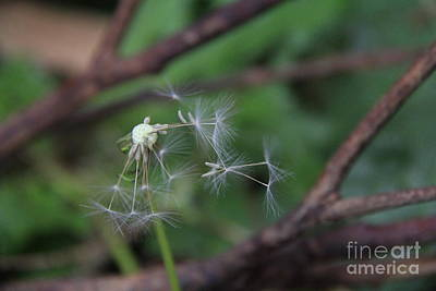 Photograph - Moloka'i Wind Blows Seeds by Jennifer Bright