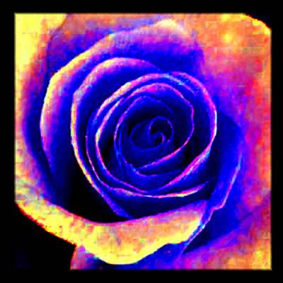 Blooming Digital Art - Molten Rose by Caroline Czelatko