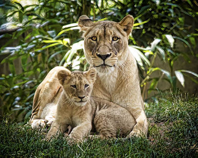 Photograph - Mom And Baby by Cheri McEachin