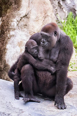 Photograph - Mom And Baby Gorilla Sitting by Stephanie Hayes