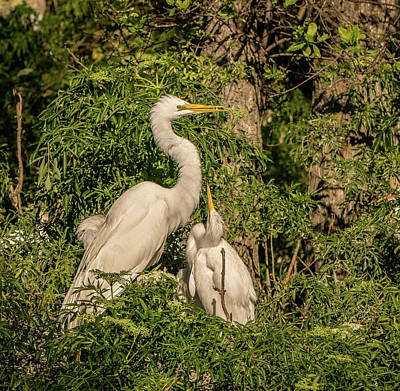 Photograph - Mom And Baby by Jane Luxton