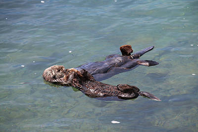 Mom And Baby Sea Otter Print by Art Block Collections