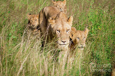 Photograph - Mom And Cubs by Jennifer Ludlum