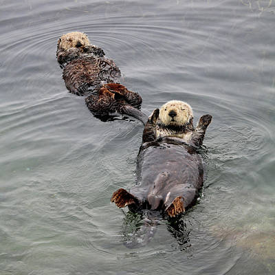 Mom And Juvenile Sea Otters Print by Art Block Collections
