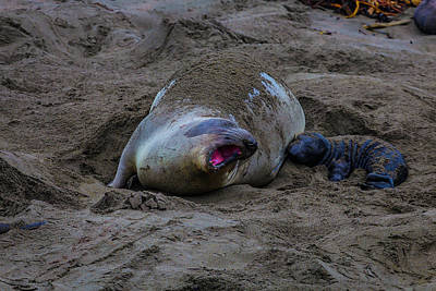 Elephant Seals Photograph - Mom And Pup Bonding by Garry Gay