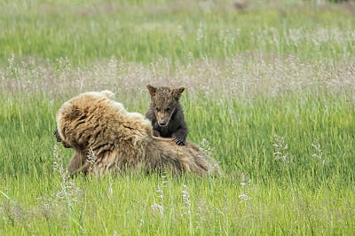 Photograph - Mom As A Jungle Gym by Belinda Greb