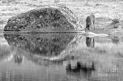 Photograph - Mom Is Lurking Nearby Black And White by Adam Jewell