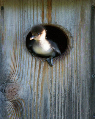 Photograph - Mom, It's A Loooong Ways Down To The Water by Gerry Sibell