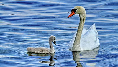Antique Maps - Mom swan with his baby by Marie Sprunger