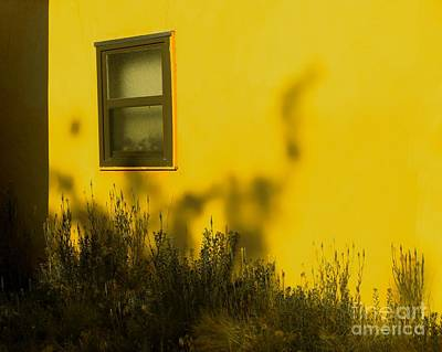 Photograph - There's A Dino In The Backyard by Tim Richards