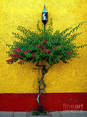 Tlaquepaque Photograph - Moment Of Green by Mexicolors Art Photography