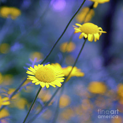 Photograph - Momentum - Sart1bc by Variance Collections