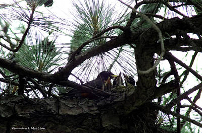 Photograph - Momma Bird And Babies by Kimmary I MacLean