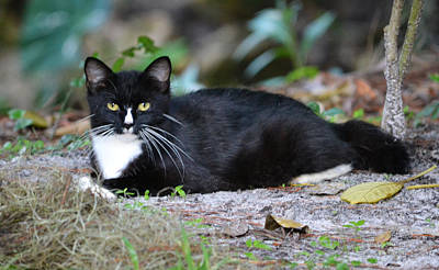Photograph - Momma Whiskers - The Cat by rd Erickson