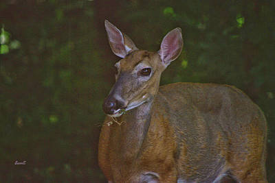 Photograph - Mommy Deerist  by Dennis Baswell