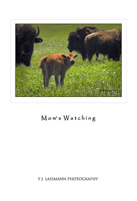 Photograph - Moms Watching by Fred Lassmann