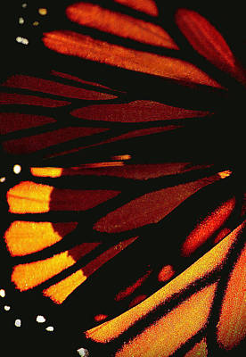 Photograph - Monarch Abstract by Nadalyn Larsen