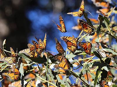 Monarch Active Cluster Art Print