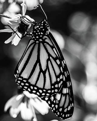 Photograph - Monarch And Brown Eyed Susan by Jeanette Fellows