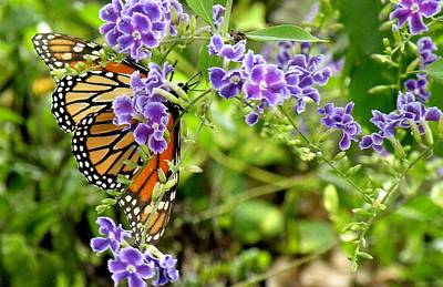 Monarch And Purple Flowers Art Print by Rosalie Scanlon