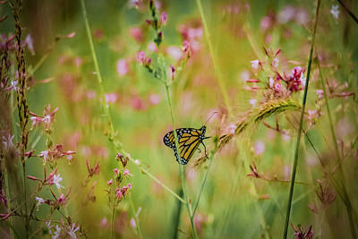 Photograph - Monarch And Wild Flowers by Ray Congrove