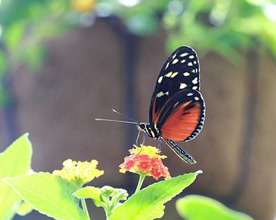 Photograph - Monarch At Franklin Park by Angela Murdock
