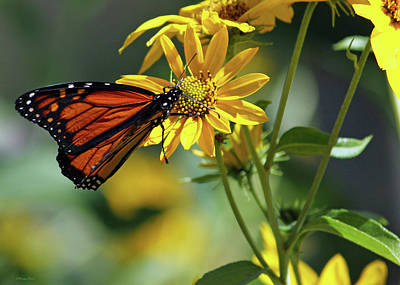 Photograph - Monarch by Inspirational Photo Creations Audrey Woods