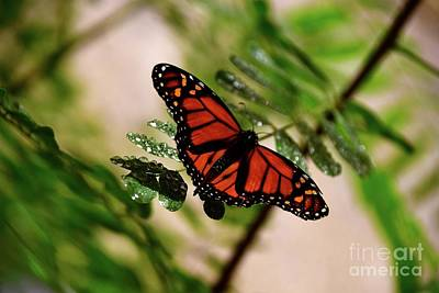 Photograph - Monarch Beauty by Johanne Peale