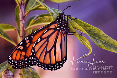 Photograph - Monarch Beauty by Karen Lewis
