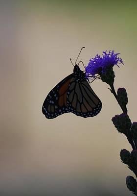 Photograph - Monarch Beauty by Ramona Whiteaker