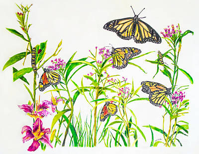 Drawing - Monarch Butterflies by Scott Parker