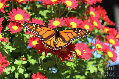Photograph - Monarch Butterfly 7 Wildlife Art by Reid Callaway