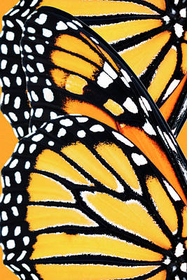 Salmon Mixed Media - Monarch Butterfly Abstract Pattern by Christina Rollo