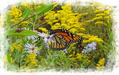 Photograph - Monarch Butterfly Among Goldenrod And Asters by Joe Duket