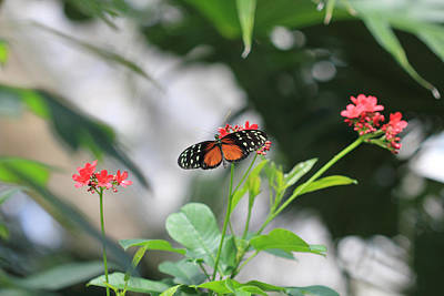 Photograph - Monarch Butterfly And Botanical Art by Angela Murdock
